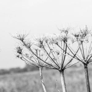free zwart wit fotografie muurposter lijst detail