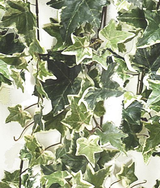 botanisch poster