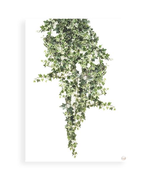botanische poster plant