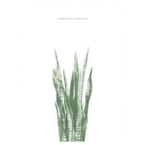 sanseveria-poster-botanical-interieurtrends2016