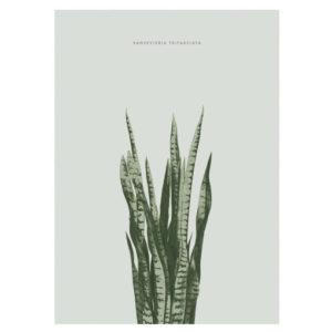 interieurtrend-sanseveriaposter-botanische