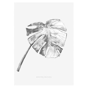 vingerplant-interieurtrend-vtwonen-2016