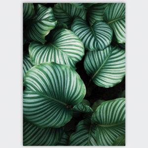 groen blad botanisch