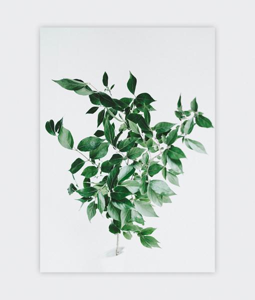 Botanische poster groene tak