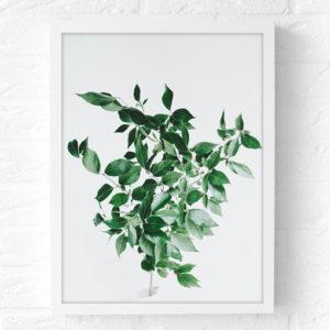 Botanische poster groene tak aan de muur