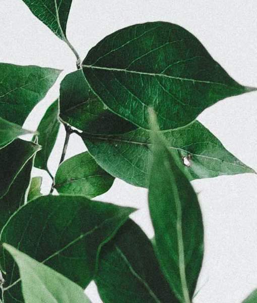 Botanische poster groene tak ingezoomd
